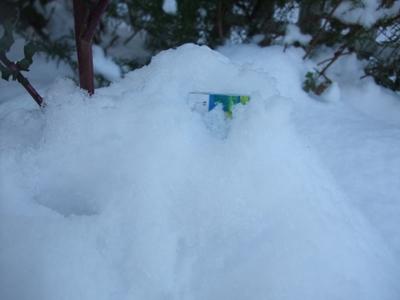 すごい大雪!