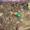 蛾の幼虫のその後